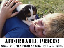 Pet Grooming - Chino, CA - Wagging Tails Professional Pet Grooming