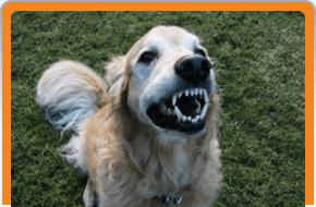 Dog Boarding   Kula, HI   Ohana Animal Inn Inc   808-878-6788