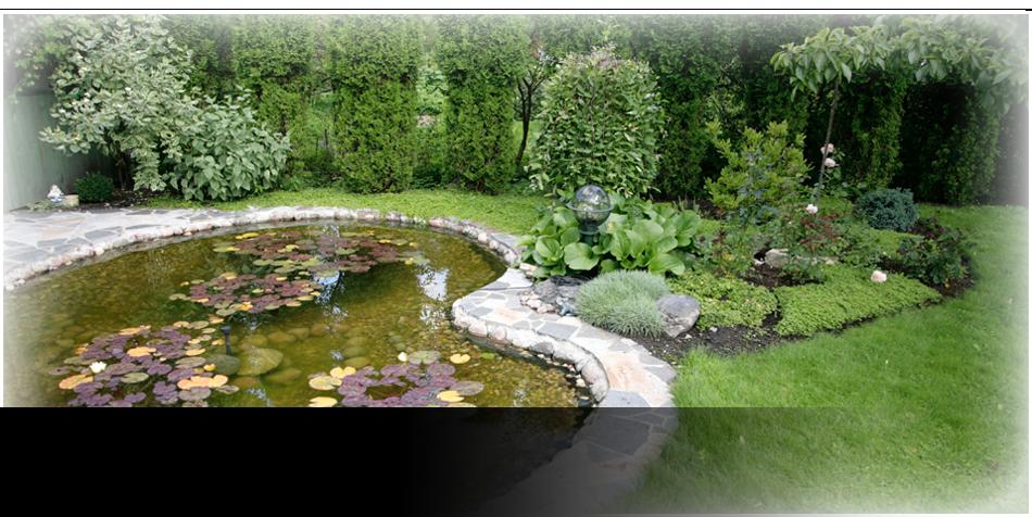 Backyard with pond
