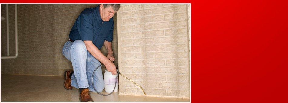 Pest Exterminator | Lexington Park, MD | A United Termite and Pest | 301-862-0001