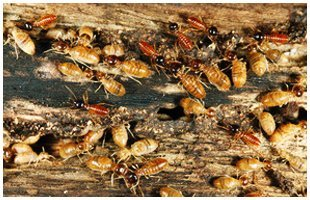 Wood Destroying Insect Inspections   Lexington Park, MD   A United Termite and Pest   301-862-0001