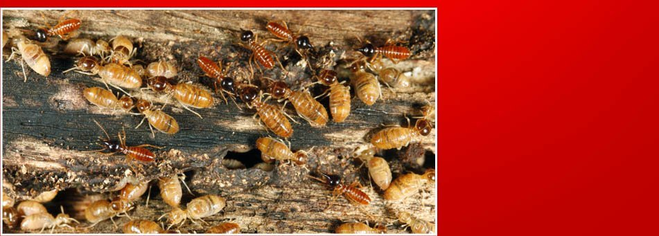 Soil Treatments  | Lexington Park, MD | A United Termite and Pest | 301-862-0001