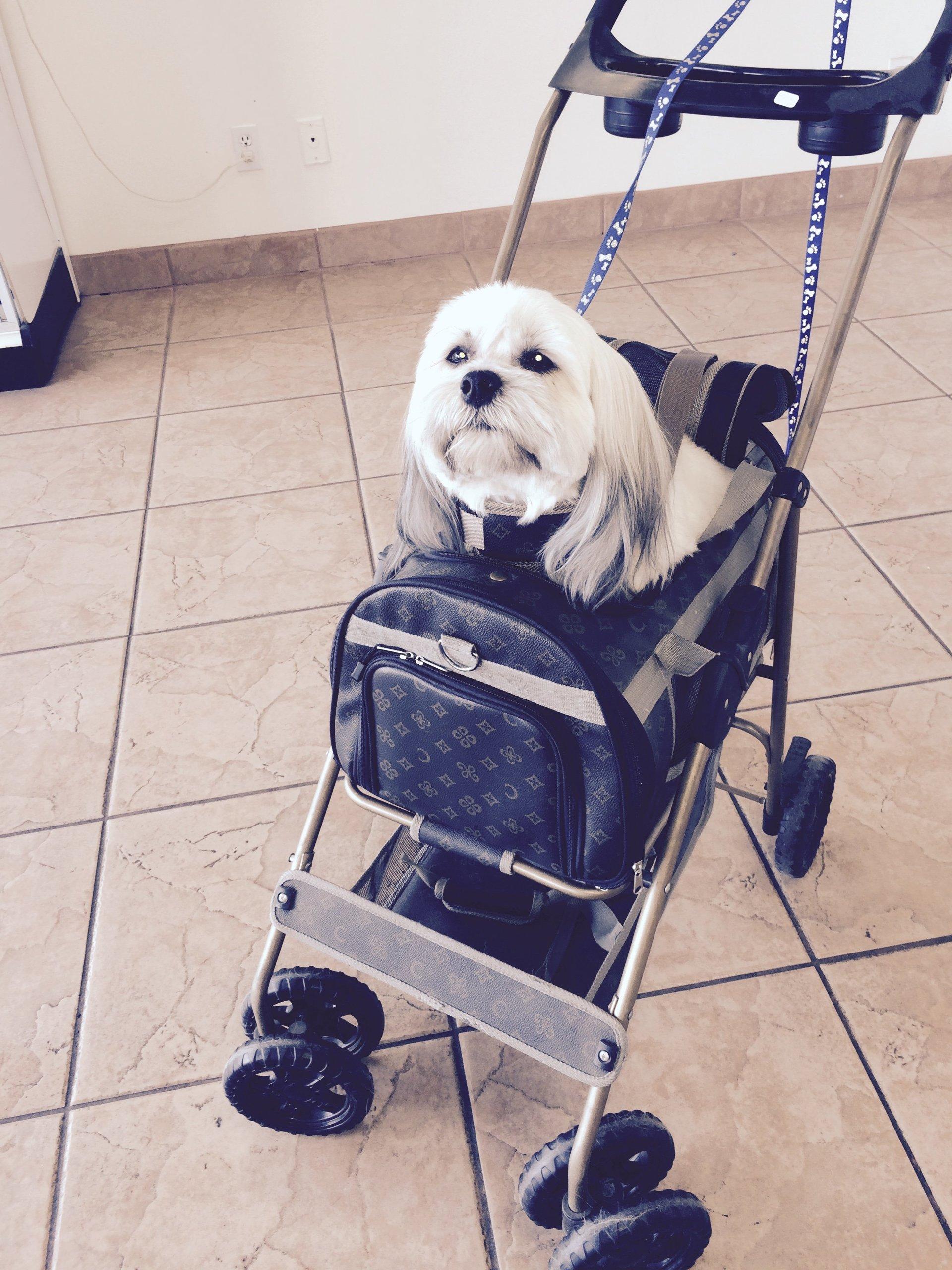 dog inside stroller