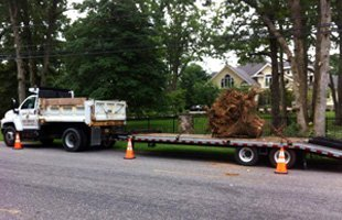 Stump Removal and grinding | Toms River, NJ | Toms River Tree Service | 732-349-3596