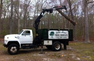 Tree removal | Toms River, NJ | Toms River Tree Service | 732-349-3596