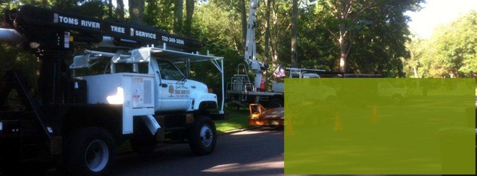 Tree care | Toms River, NJ | Toms River Tree Service | 732-349-3596