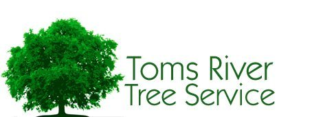 Tree care | Toms River, NJ | Toms River Tree Service | 732-349-3596