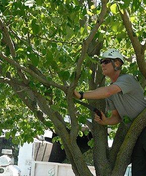 Tree Maintenance - Glens Falls, NY - Fones Tree Service