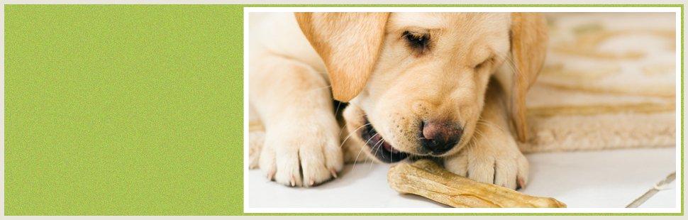 Dog with a dog treat
