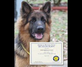 Dog Training Programme