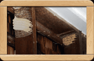 pest services | Burnsville, MN | Bob's Pest Control | 952-212-1196