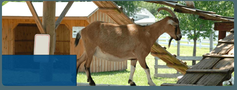Large Animal Medicine | Checotah, OK | Glover Veterinary Services | 918-473-2676