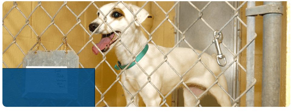 Pet Boarding | Checotah, OK | Glover Veterinary Services | 918-473-2676