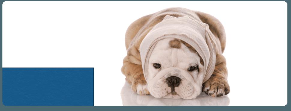 Small Animal Medicine | Checotah, OK | Glover Veterinary Services | 918-473-2676