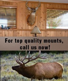 Taxidermy Mounts - Roy, WA - Rainer Taxidermy - deer head - For top quality mounts, call us now!
