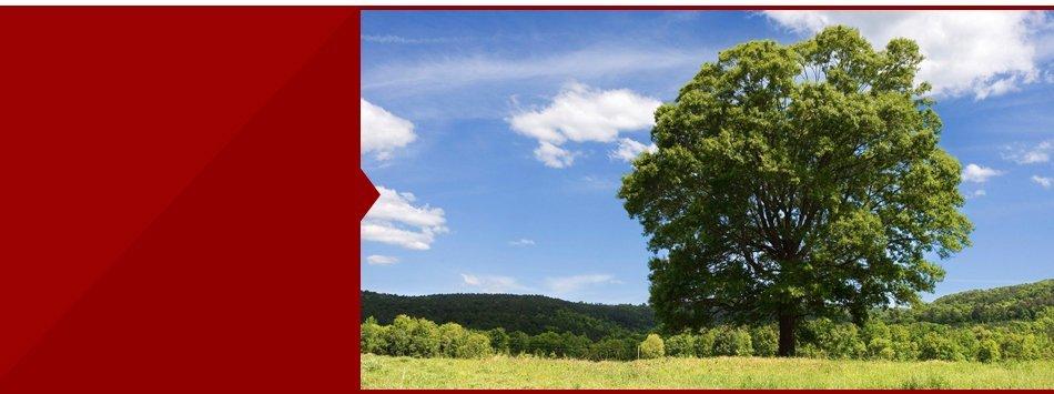 Tree Care Service   Browns Mills, NJ   Reynolds & Sons Tree Service   609-893-9329