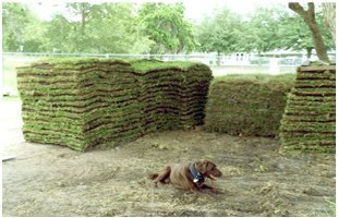 Sod Delivery | Citrus County, FL  | Connolly's Sod and Nursery | 352-634-1625