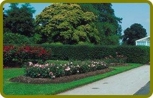 Landscaping | Landisville, NJ | Monroy & Sons | 856-364-3938