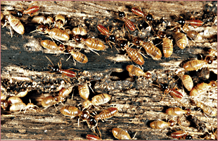 Group of termites