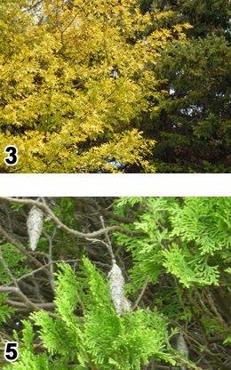 Red Cloud, NE Arborists - Thomas Tree Service