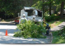 Tree Removal | Elizabethtown, PA | Green's Tree Service | 717-367-1115