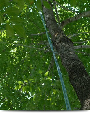 Cabling | Elizabethtown, PA | Green's Tree Service | 717-367-1115
