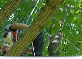 Tree Cabling | Elizabethtown, PA | Green's Tree Service | 717-367-1115