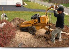 Stump Removal | Elizabethtown, PA | Green's Tree Service | 717-367-1115
