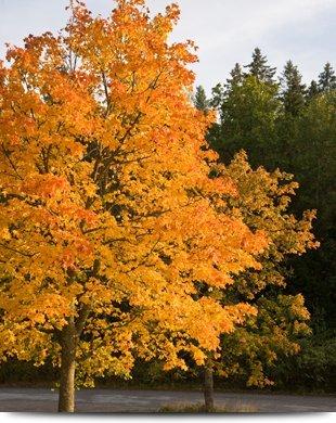 Tree Service | Elizabethtown, PA | Green's Tree Service | 717-367-1115