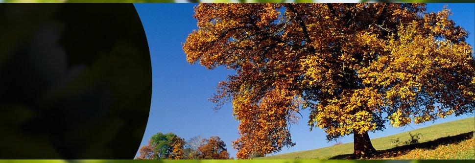Trees | Elizabethtown, PA | Green's Tree Service | 717-367-1115