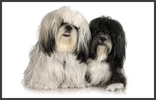 Benefits to Grooming | Emporia, KS | Top Dog Grooming Salon | 620-342-3647