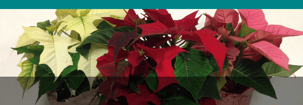 Gift Baskets - Haleiwa, HI - Alluvion, Inc.