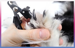 Grooming | Altoona, IA | Flawless Paws | 515-967-9999