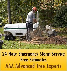 Arborist and Tree Services - Bates City,  MO - AAA Advanced Tree Experts