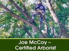 Arborist - Butte Valley, CA - McCoy's Tree Service
