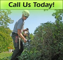 Arborist - Freetown, MA - Marc St. Laurent Complete Tree Service