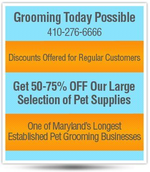 Dog Groomer - Baltimore, MD - Lucky 3 Dog & Cat Grooming