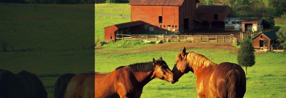 Farm Insurance | North Mankato, MN | Key City Insurance Agency | 507-625-7667