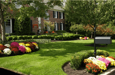 Garden with lawn and plants