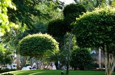 Tree in a landscape