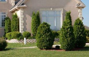Well shaped shrubs