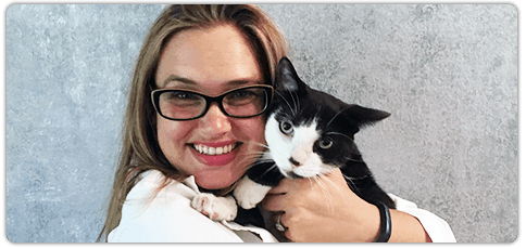 Veterinarian | Sarasota, FL | Cat Hospital Of Sarasota | 941-921-4040