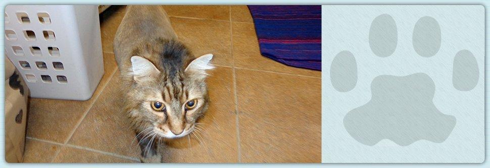 clinic | Sarasota, FL | Cat Hospital Of Sarasota | 941-921-4040