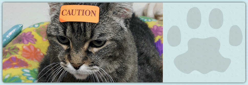 clinic   Sarasota, FL   Cat Hospital Of Sarasota   941-921-4040