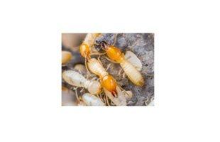 Pest information | Oklahoma City, OK | Accura Pest Control | 405-229-9782