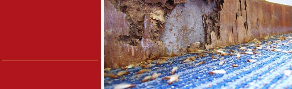 Pest control tips | Oklahoma City, OK | Accura Pest Control | 405-229-9782