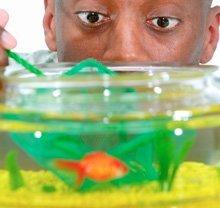 Aquarium Maintenance - Gainesville, FL  - Fish Works LLC