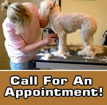 Pet Groomer - Findlay, OH - The Barking Barber - Professional Grooming - Call For An Appointment!
