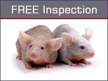 Pest Termination - Cody, WY - Stroupe Pest Control