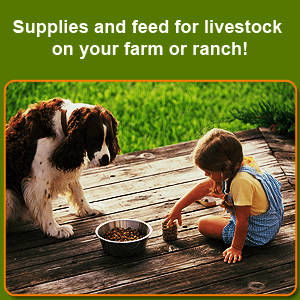 bridle - Montgomery County, TX - My Feed Store and More - dog food - Supplies and feed for livestock on your farm or ranch!